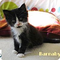 Adopt A Pet :: Barnaby - Loves Humans! - Huntsville, ON