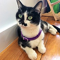 Adopt A Pet :: Stacey, An Amazing Rescue Story - Brooklyn, NY
