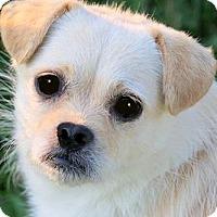 Adopt A Pet :: BOOMER & BRADY(FATHER & SON) - Wakefield, RI