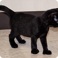 Adopt A Pet :: Billet - Binghamton, NY