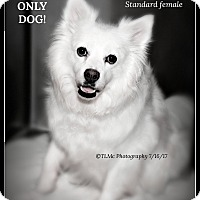 Adopt A Pet :: Jolene - Elmhurst, IL