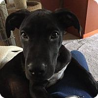 Adopt A Pet :: Neo - Marlton, NJ