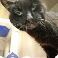 Adopt A Pet :: Gabrielle - Ann Arbor, MI