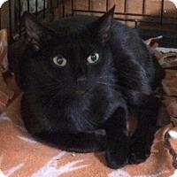 Adopt A Pet :: Kierra - Middletown, NY