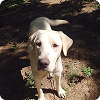 Adopt A Pet :: Omar - PORTLAND, ME