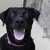 Adopt A Pet :: Jazz - South Bend, IN
