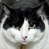 Adopt A Pet :: Lexi Lou - Mountain Home, AR