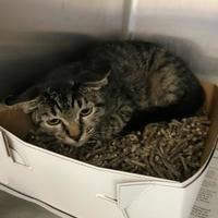 Adopt A Pet :: Arlo - Miami, FL
