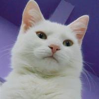 Adopt A Pet :: Frosty - Belleville, MI