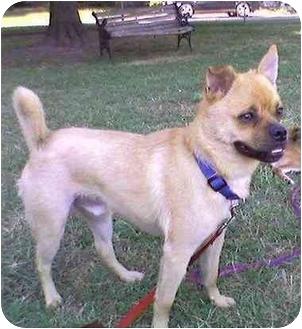 Pug Mix Dog for adoption in Williamsburg, Virginia - Rocky
