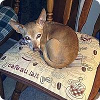 Adopt A Pet :: Barney - Estes Park, CO