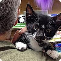Adopt A Pet :: Jay - Cranford/Rartian, NJ