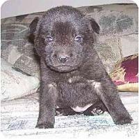 Adopt A Pet :: Mini - Evansville, IN