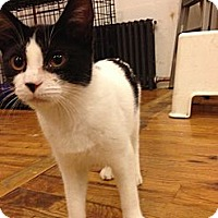 Adopt A Pet :: DiDi - Brooklyn, NY
