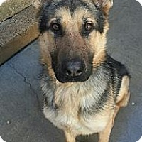 Adopt A Pet :: Chance*ADOPTED!* - Chicago, IL