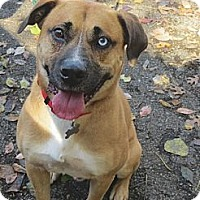Adopt A Pet :: Beau - PENDING, in Maine - kennebunkport, ME