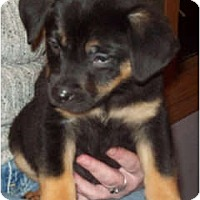 Adopt A Pet :: RUFFLES (ADOPTION PENDING) - Southport, NC