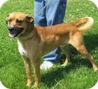 Boxer Mix Dog for adoption in Mineral, Virginia - Dennis