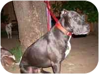 Pit Bull Terrier Mix Dog for adoption in Carrollton, Texas - Dweezil