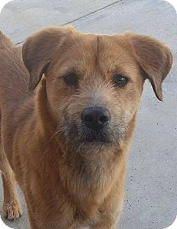 Terrier (Unknown Type, Medium) Mix Dog for adoption in Rosamond, California - Lacey