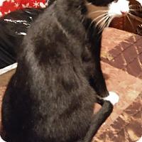 Adopt A Pet :: Oscar - Farmington, AR