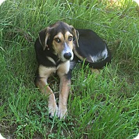 Adopt A Pet :: Sally - West Hartford, CT