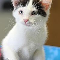 Adopt A Pet :: Janie (Nikki's foster) - Yukon, OK