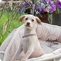 Adopt A Pet :: MILDRED - Inland Empire, CA