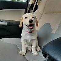 Adopt A Pet :: Carmen - Lombard, IL