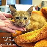 Adopt A Pet :: ORANGECICLE - Conroe, TX