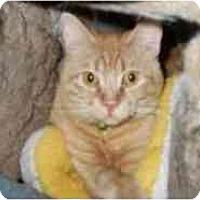 Adopt A Pet :: Gouda - Pasadena, CA