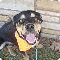 Adopt A Pet :: Bocephus - Stilwell, OK