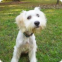 Adopt A Pet :: Abel - Mocksville, NC