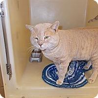 Adopt A Pet :: O'Malley - Heber Springs, AR