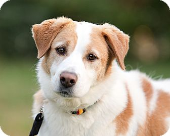 Terrier (Unknown Type, Medium) Mix Dog for adoption in Wilmington, Delaware - Buster