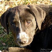 Adopt A Pet :: Harvey - COURTESY POST - Albany, NY