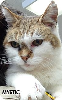 Domestic Shorthair Cat for adoption in Lapeer, Michigan - MYSTIC--FEE WAIVED! TABBY