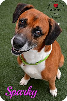 Hound (Unknown Type) Mix Dog for adoption in Youngwood, Pennsylvania - Sparky