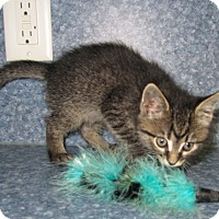 Adopt A Pet :: Brooklyn - Harrisburg, NC