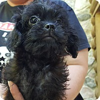 Adopt A Pet :: Parfait - ADOPTED!! - Antioch, IL