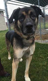 German Shepherd Dog Mix Dog for adoption in Ashtabula, Ohio - Max