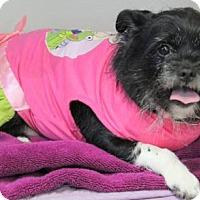 Adopt A Pet :: Fergie - Mocksville, NC