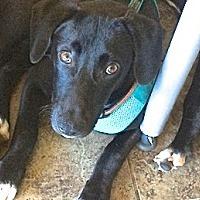 Adopt A Pet :: Alvarado - San Diego, CA