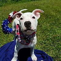 Adopt A Pet :: Aster - Detroit, MI