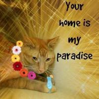 Adopt A Pet :: Garfield - Winfield, KS