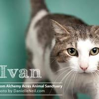 Adopt A Pet :: Ivan - Salem, OH
