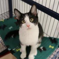 Adopt A Pet :: Lexi - Suwanee, GA