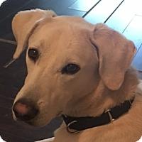 Adopt A Pet :: Newton - Newnan, GA