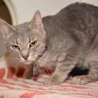 Adopt A Pet :: Connie - Hamilton, OH