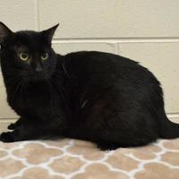 Adopt A Pet :: Herbie - Thomasville, GA